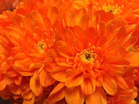 <h4>Chr T Baltica Orange</h4>