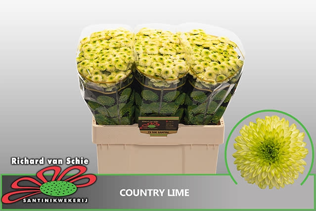 <h4>CHR S COUNTRY LIME</h4>