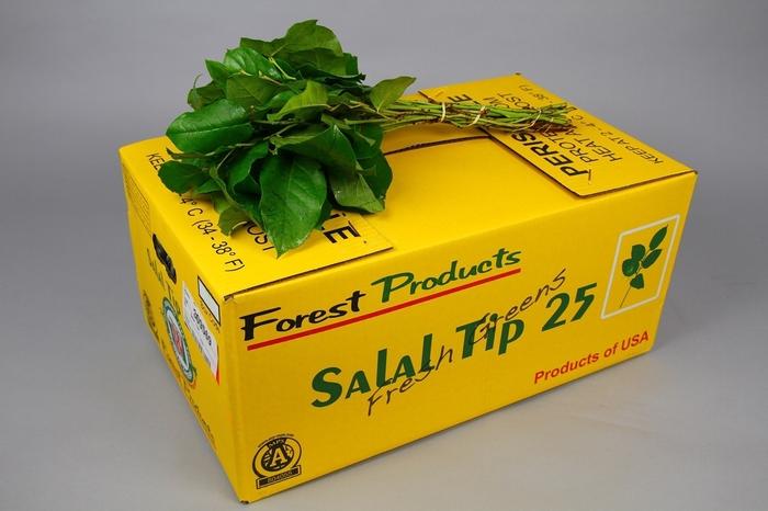 <h4>Salal  Tips</h4>