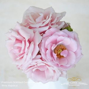 R TR SCENTED PINK MAJOLICA