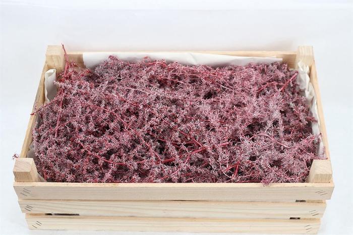 <h4>Wax Asparagus Red P/k</h4>