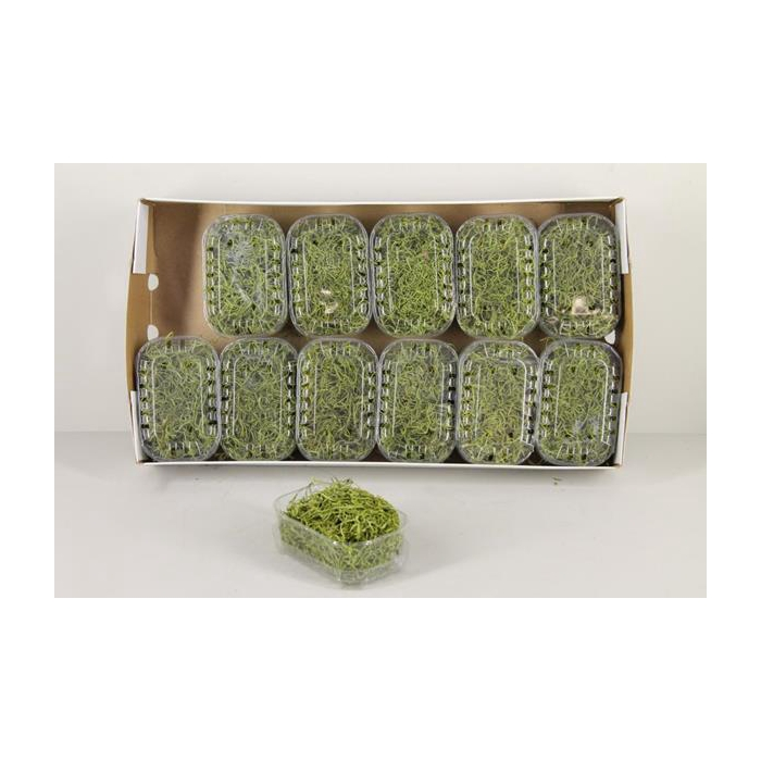 <h4>Moss Tillandsia Box Green</h4>