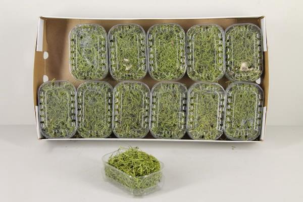 <h4>Moss Tillandsia Box Green</h4>