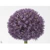 Allium Pinball Wizar