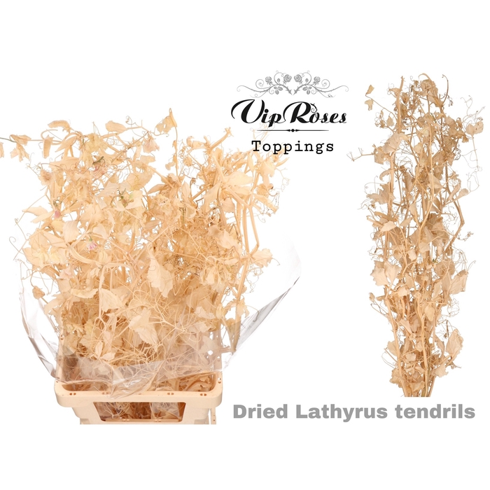 <h4>DRIED LATHYRUS TENDRILS</h4>
