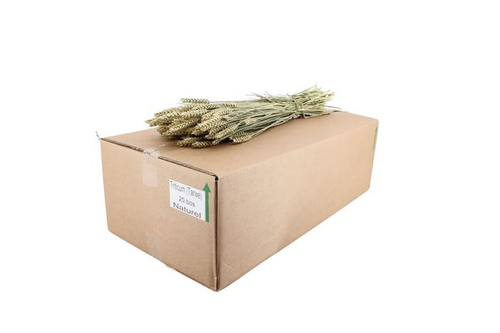 <h4>Dried Triticum ( Tarwe ) Natural</h4>