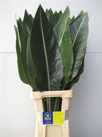 <h4>Strelitziablad Ø 20cm</h4>