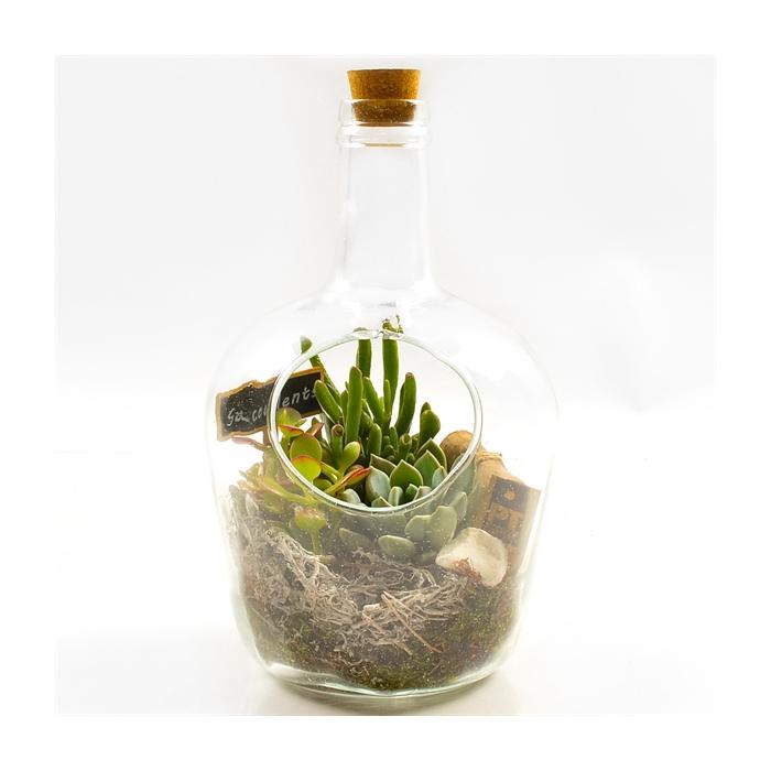 <h4>Arr.  Succulents H%</h4>