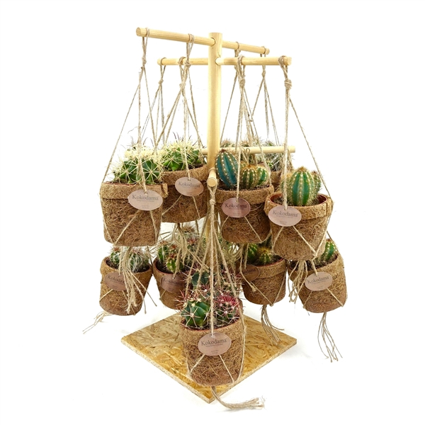 <h4>Kokopot display 60 cm cactus    NO PLASTIC 100% natural</h4>