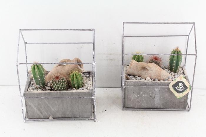 <h4>Arr. Js Huisje - Cactus</h4>