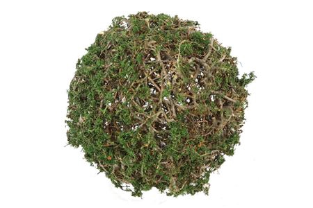 <h4>Ball Bonsai Mossed D35.0 Nat/d.green</h4>