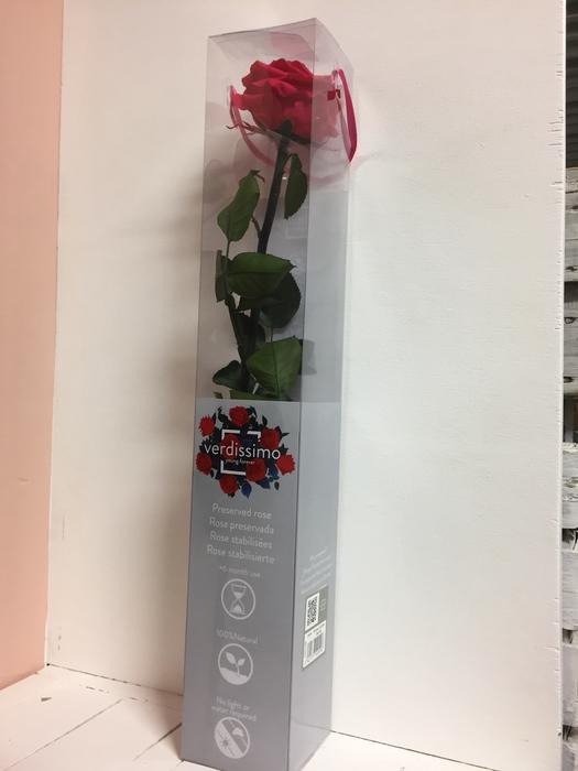 <h4>Roos op steel xl Plexi 55cm Dark pink</h4>
