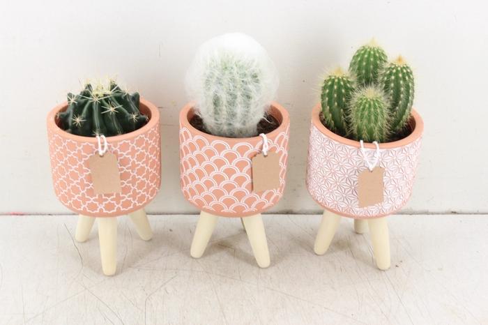 <h4>arr. UB - Cactus op pootjes L</h4>