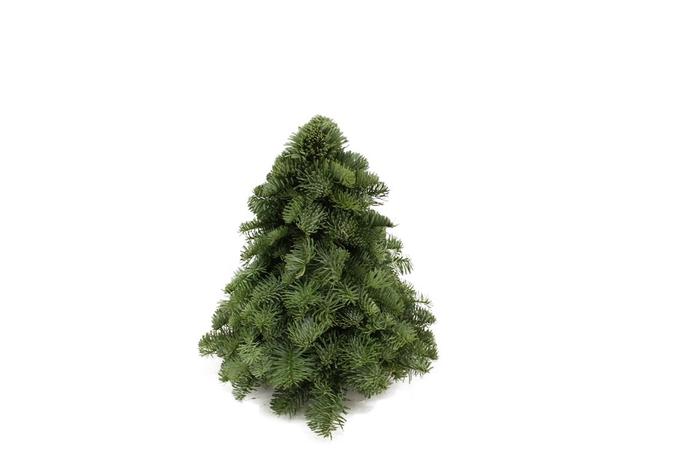 <h4>Kerstboom Nobilis 30</h4>