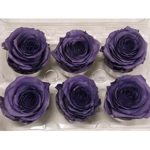 R Prs Lavendel
