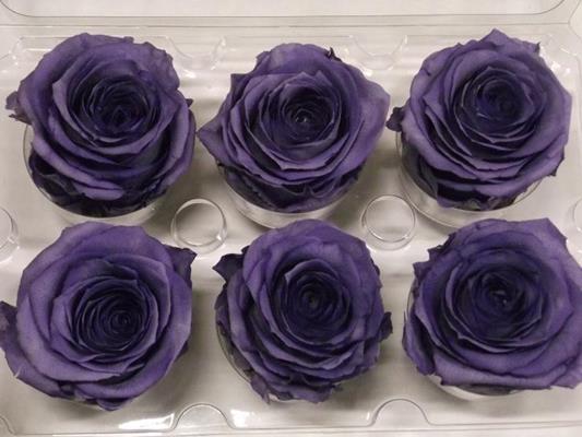<h4>R Prs Lavendel</h4>