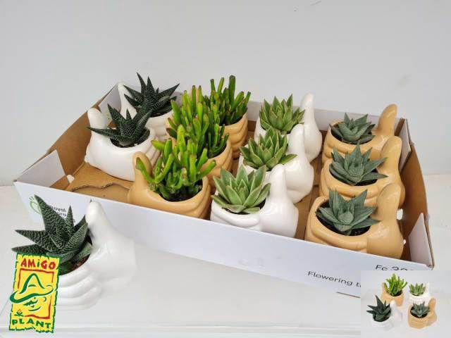 <h4>Arrangement Succulenten Ceramique #</h4>