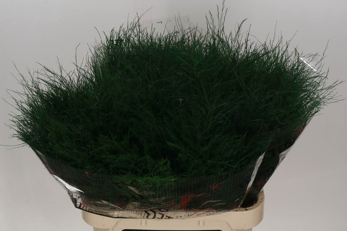 <h4>Asparagus Kleurbehandeld Treefern</h4>