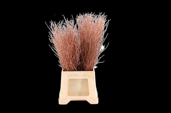 Berk ( Birch ) Copper