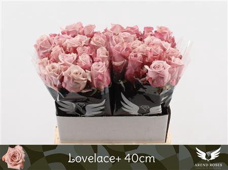 <h4>R Gr Lovelace+</h4>