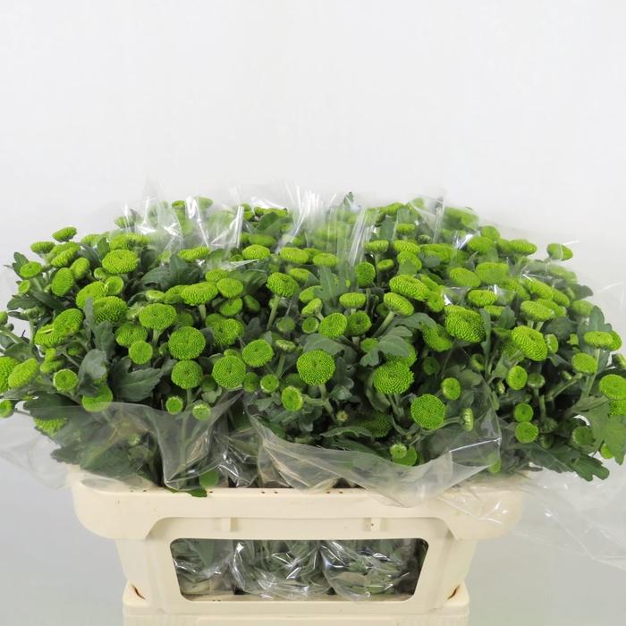 <h4>Chrysanthemum spray feeling green</h4>