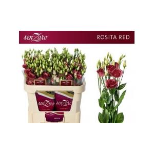 Lisianthus du Rosita Red