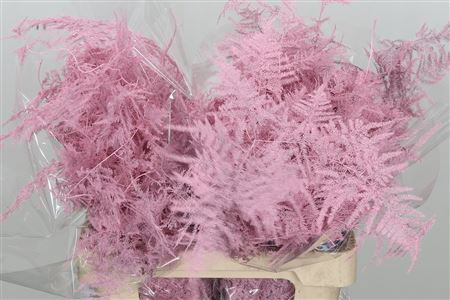 <h4>Asparagus Large Baby Pink</h4>