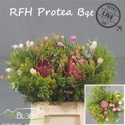 <h4>Protea Safari BQ green</h4>