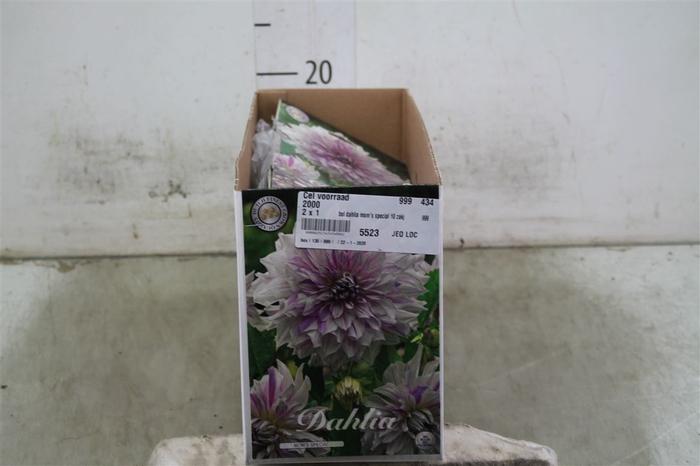 <h4>Bol Dahlia Mom's Special 10 Zakjes X1</h4>