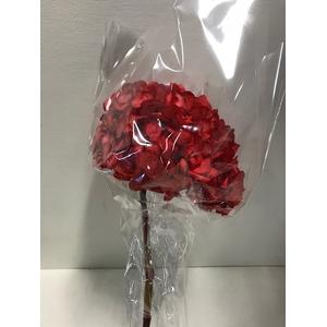 Hydrangea / Hortensia d15cm rood