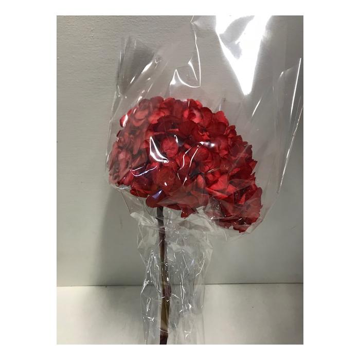 <h4>Hydrangea / Hortensia d15cm rood</h4>