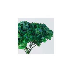 Hydrangea / Hortensia Nat.Green / Blue HRT/2160