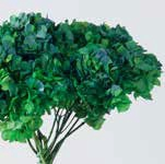 <h4>Hydrangea / Hortensia Nat.Green / Blue HRT/2160</h4>