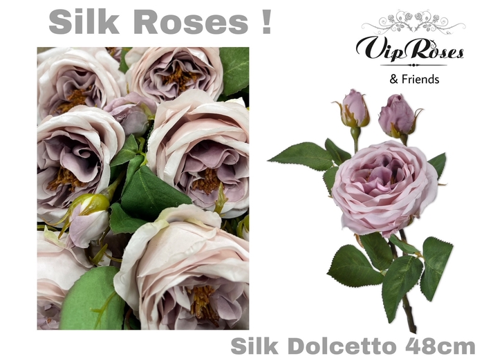 <h4>SILK DOLCETTO</h4>