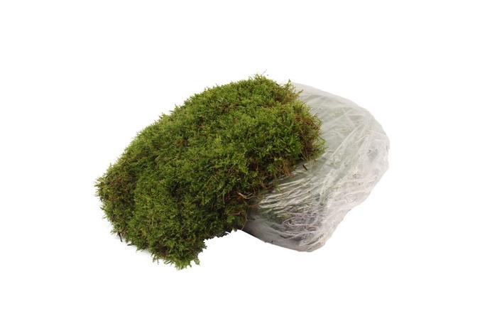 <h4>Mos Platmos ( Big Plastic Bag )</h4>
