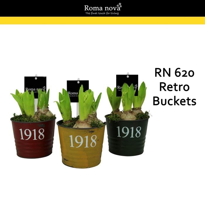 <h4>Arr.  Hyacinthus L%</h4>