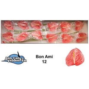 ANTH A BON AMI