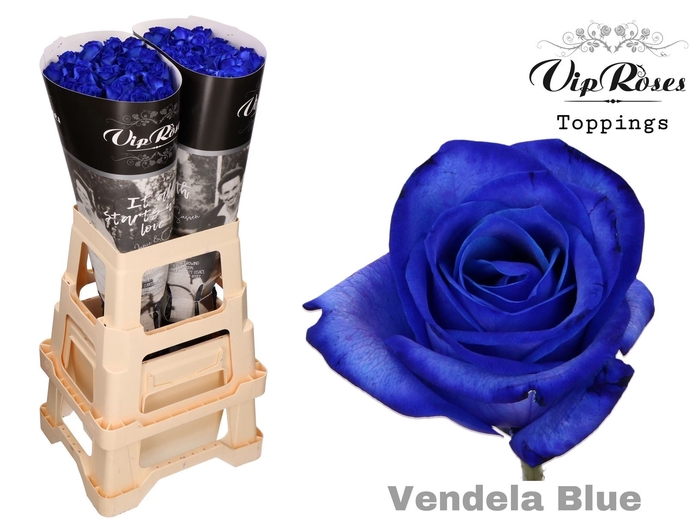 <h4>Prs GR VENDELA BLUE</h4>