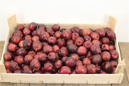 <h4>Appels Donkerrood P/kist</h4>
