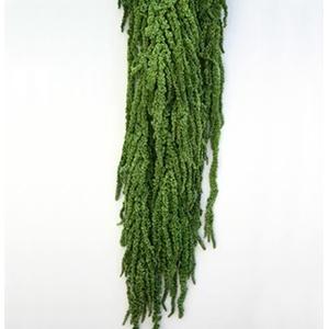 Amaranthus Green AMA/4104