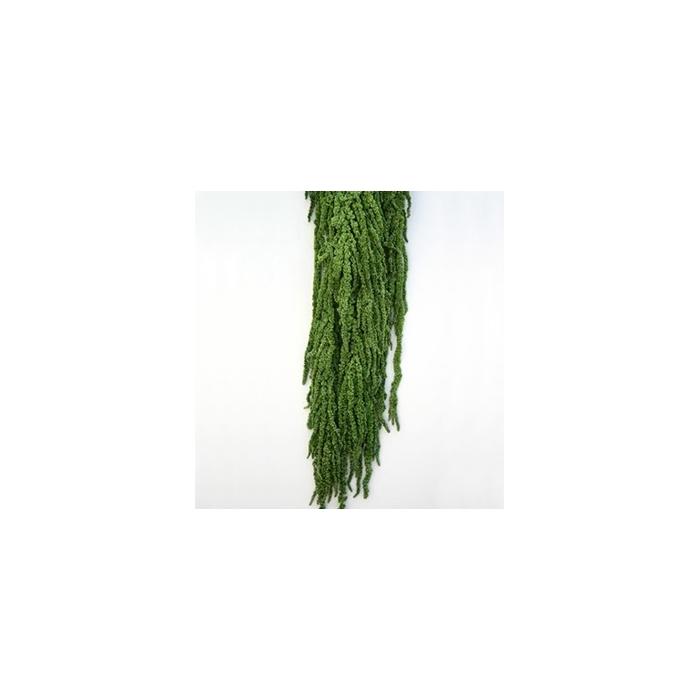 <h4>Amaranthus Green AMA/4104</h4>