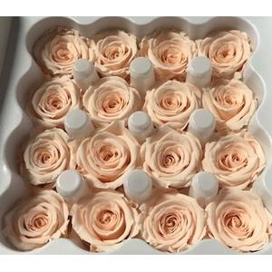 Roos Ava Almond Cream