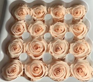 <h4>Roos Ava Almond Cream</h4>