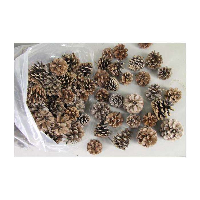 <h4>Pine Cone Natural (bag 5kg)</h4>