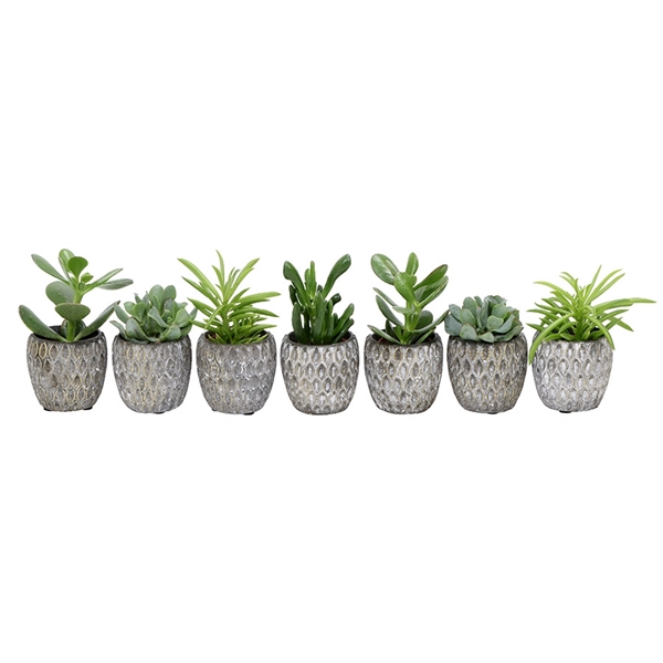 <h4>Little lizard greens succulenten 5.5cm in marrakesh pot grey</h4>