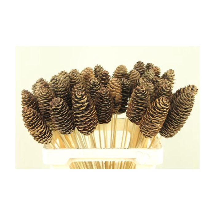 <h4>Stick Rai Cone Natural</h4>