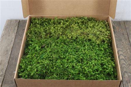 <h4>Pres Star Moss Light Green 600gr</h4>
