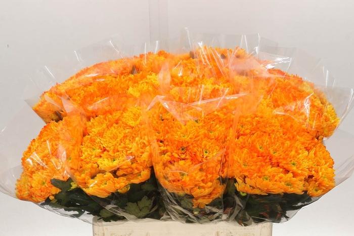 <h4>Chrysant geverfd Euro Oranje</h4>
