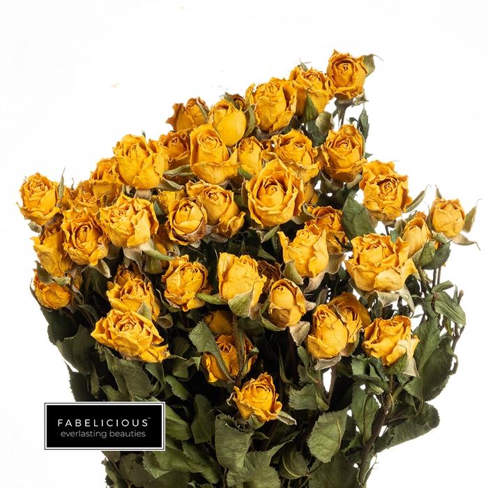 <h4>Dried Rosa tros Tarantella</h4>