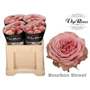 R GR BOURBON STREET